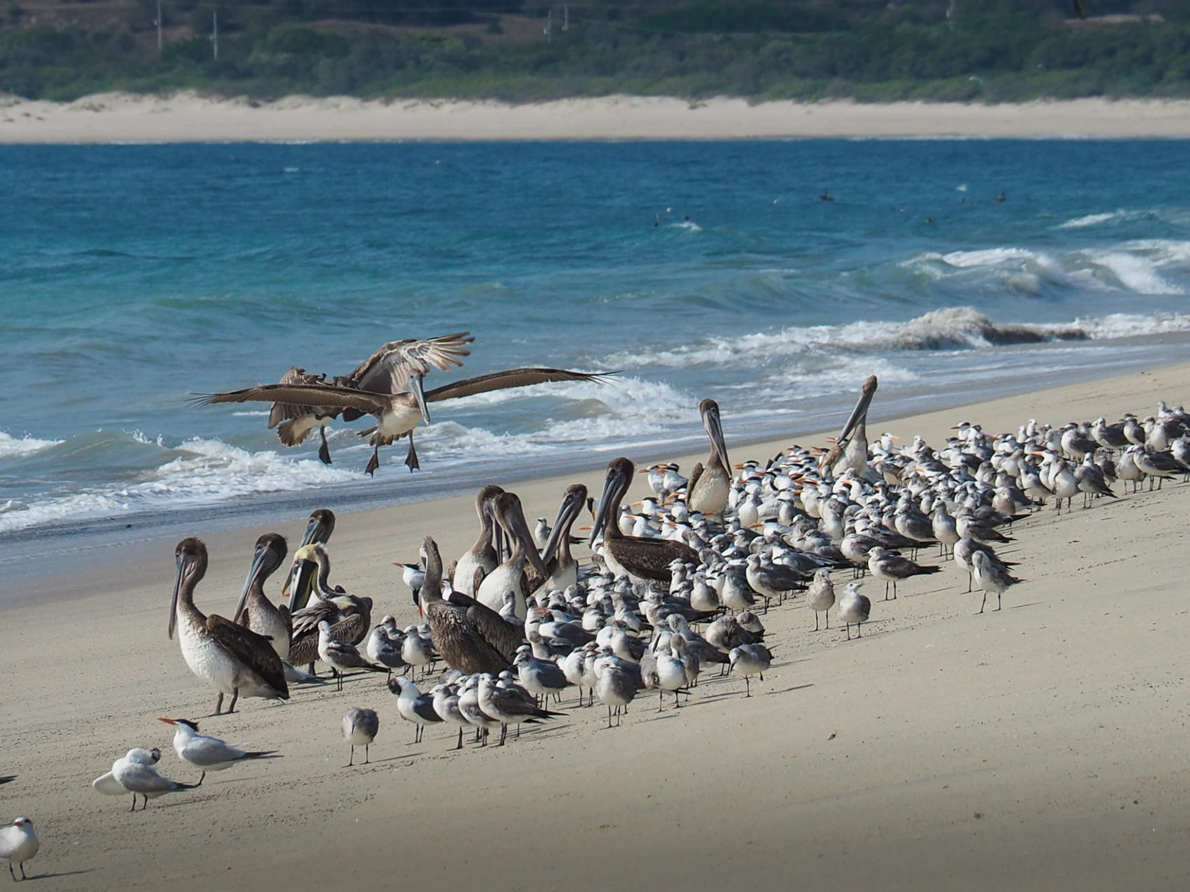 Nur jede Menge Seevögel sind mit uns am Strand