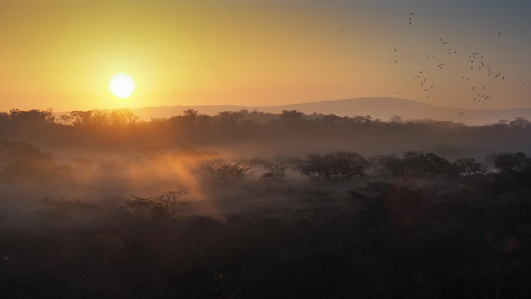Ein Schwarm grüner Papageien fliegt in den Sonnenaufgang