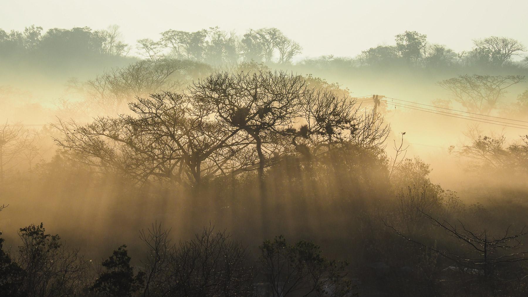 Der Morgennebel lichtet sich im Urwald