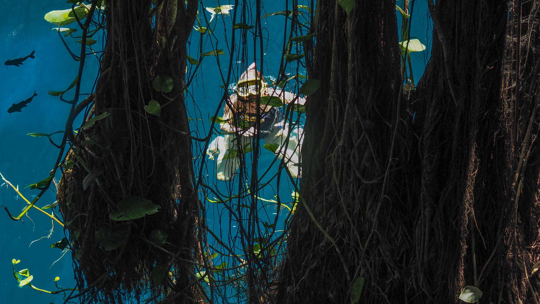 Etwas seltsam: schnorcheln zwischen mächtigen, im Wasser schwebenden Baumwurzeln