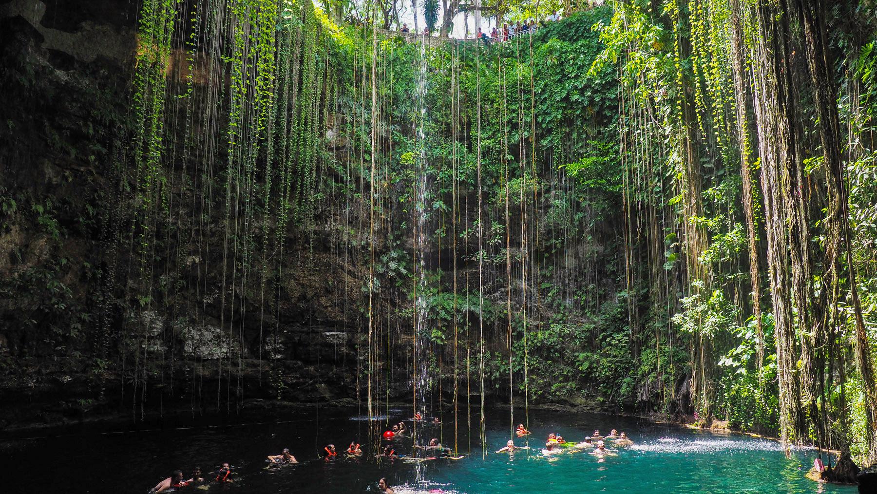 Pflanzenvorhang in der Cenote Kill-Ill