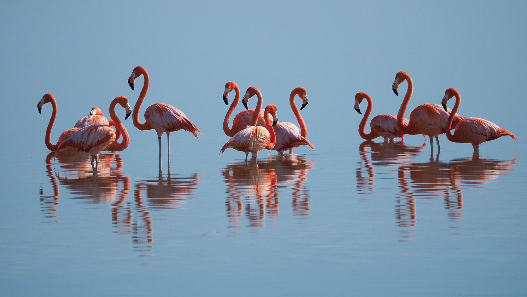 Wo normalerweise tausende Flamingos leben, sind leider nur im Moment nur wenige zu beobachten