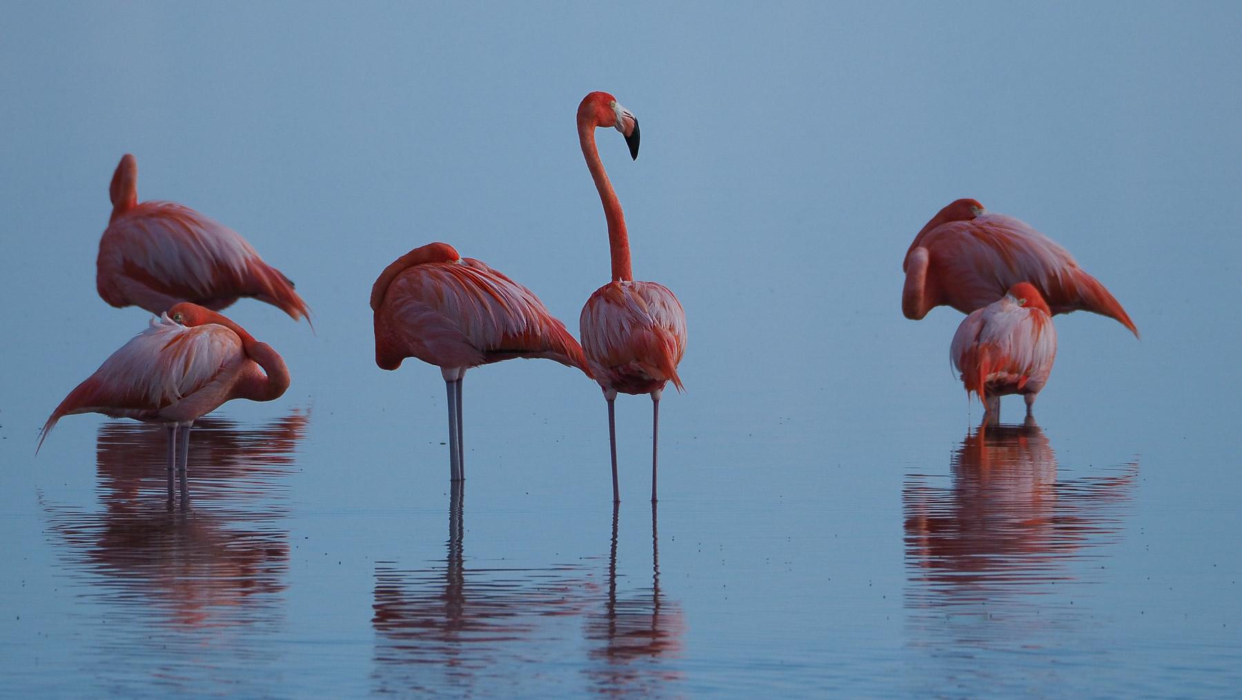 Flamingos bei Rio Lagartos