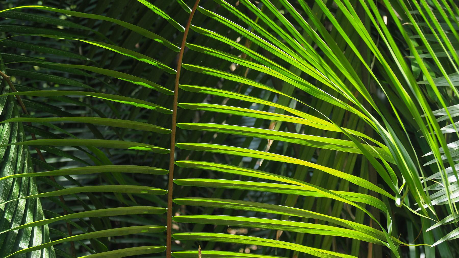 Grün, überall nur Grün