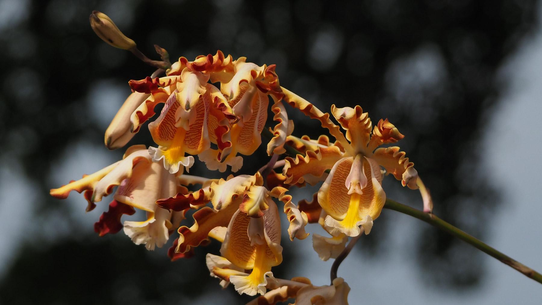 So schöne, wilde Orchideen