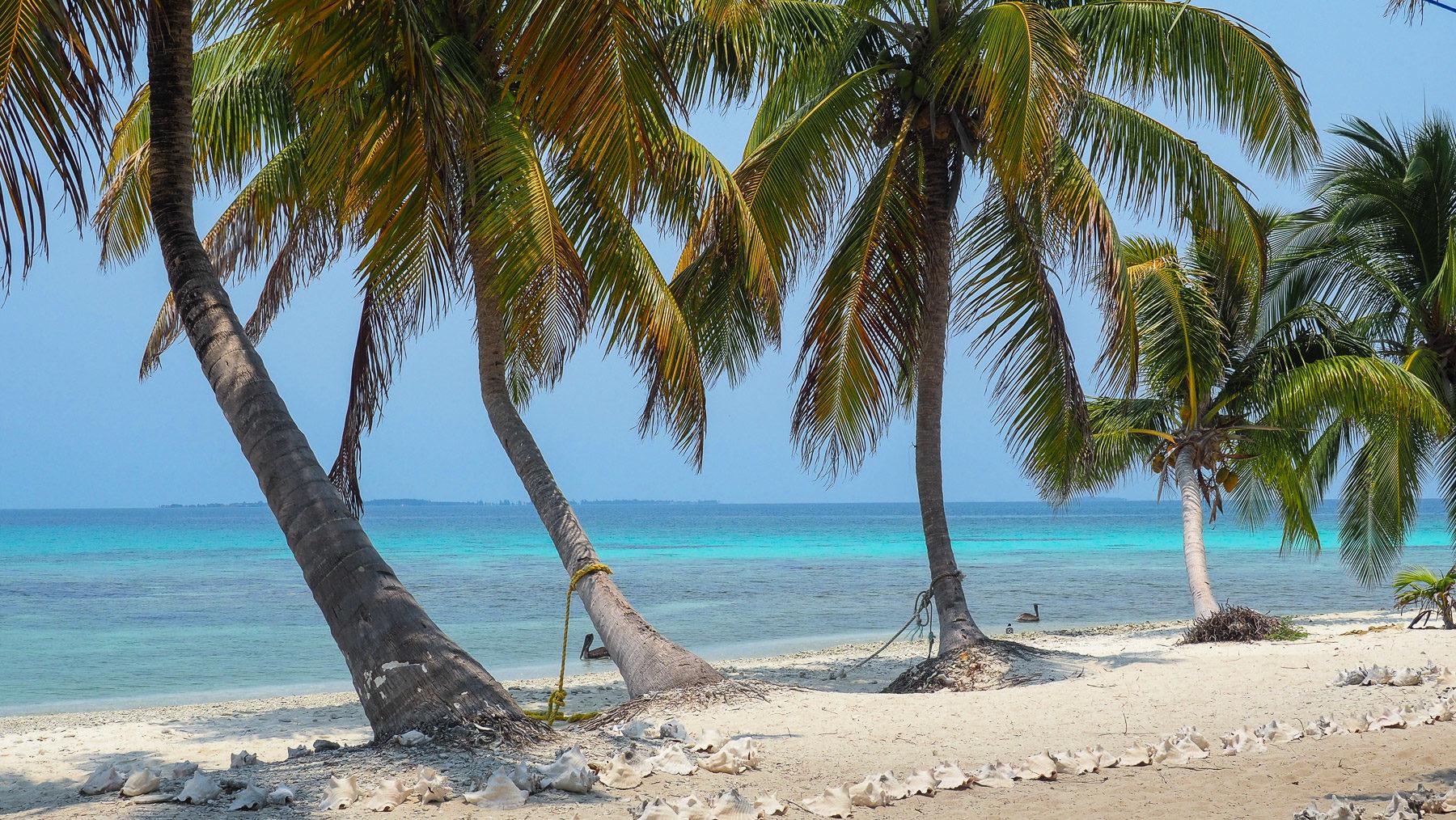 Strand Idyll mit Conch Muschelschalen