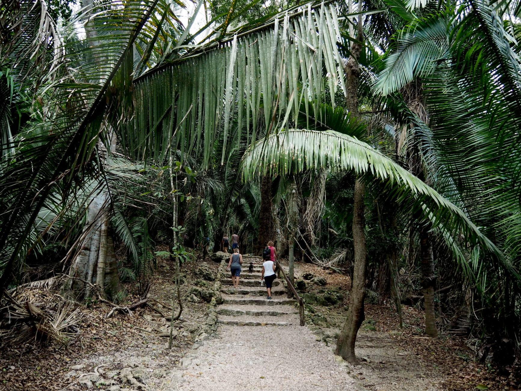 Weg durch üppige Vegetation