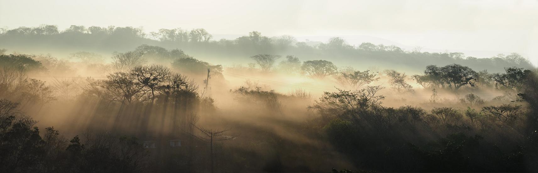 Lieblingsbild: Morgennebel im Urwald