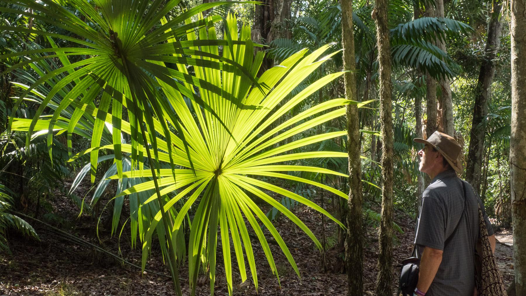 Pflanzen- und Tierwelt in Tikal fast so schön wie die Ruinen selbst