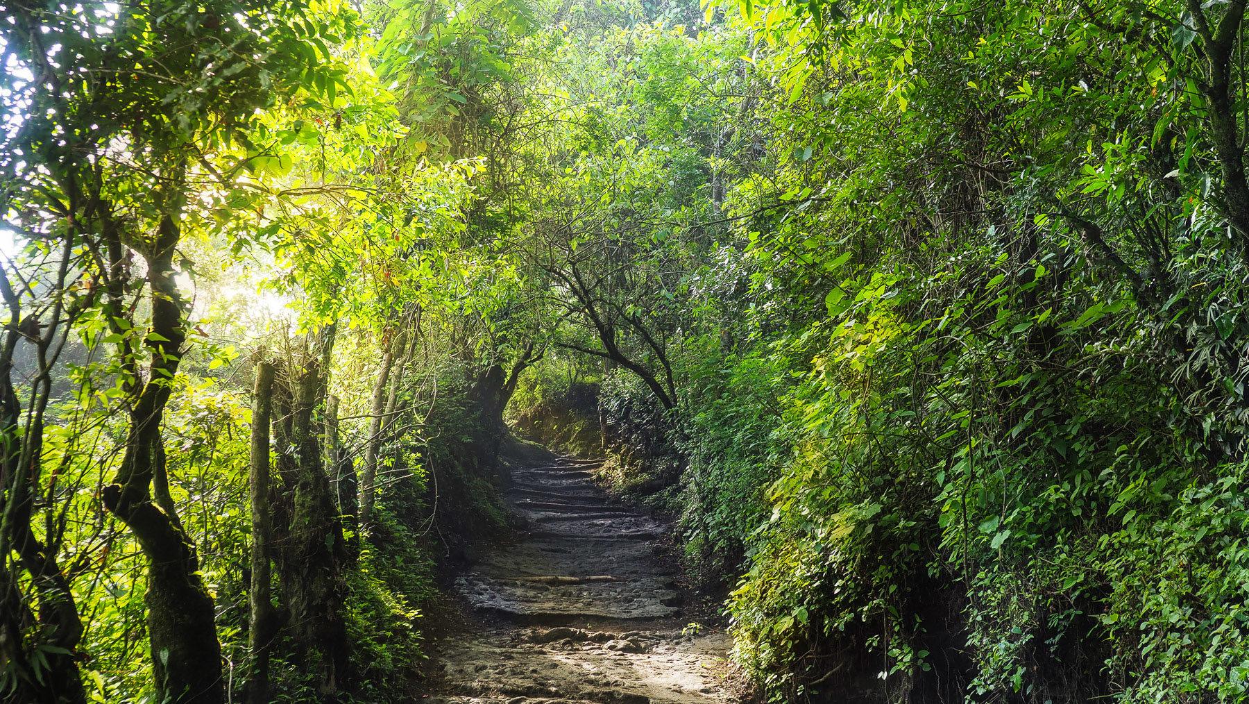 Weg auf den Vulkan Pacaya
