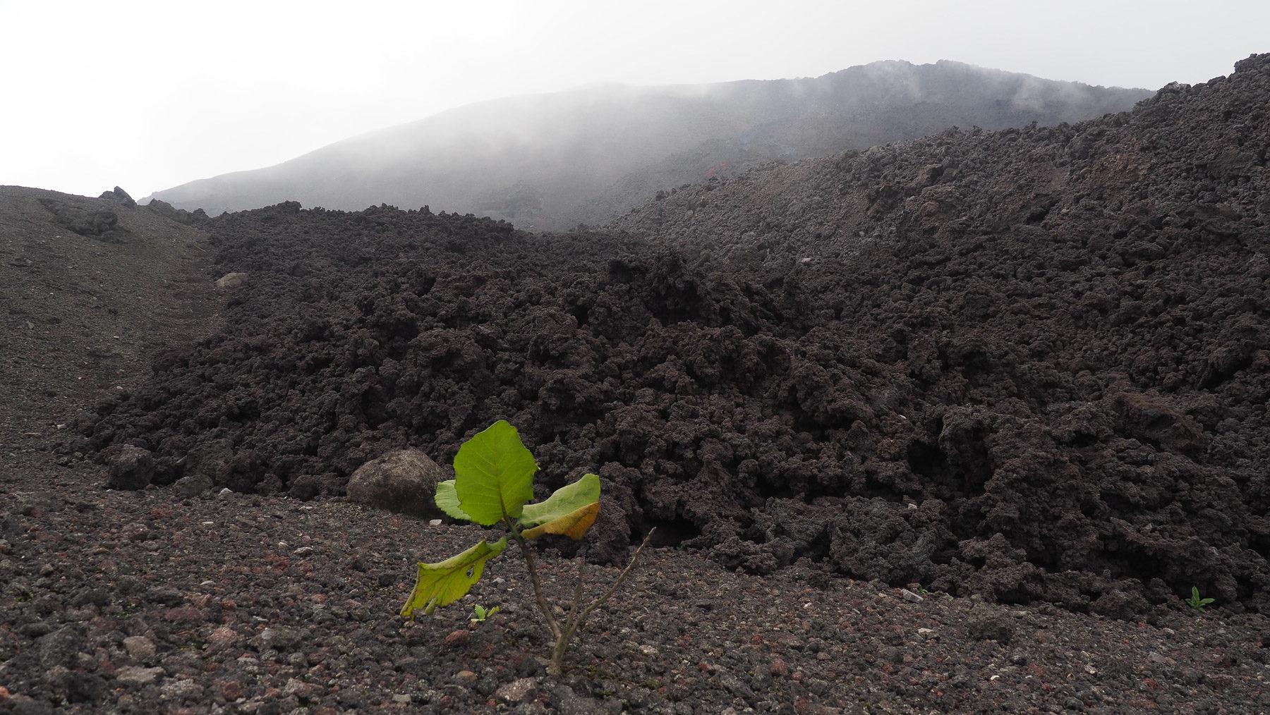 Frische, sehr heiße Lavafelder am Pacaya