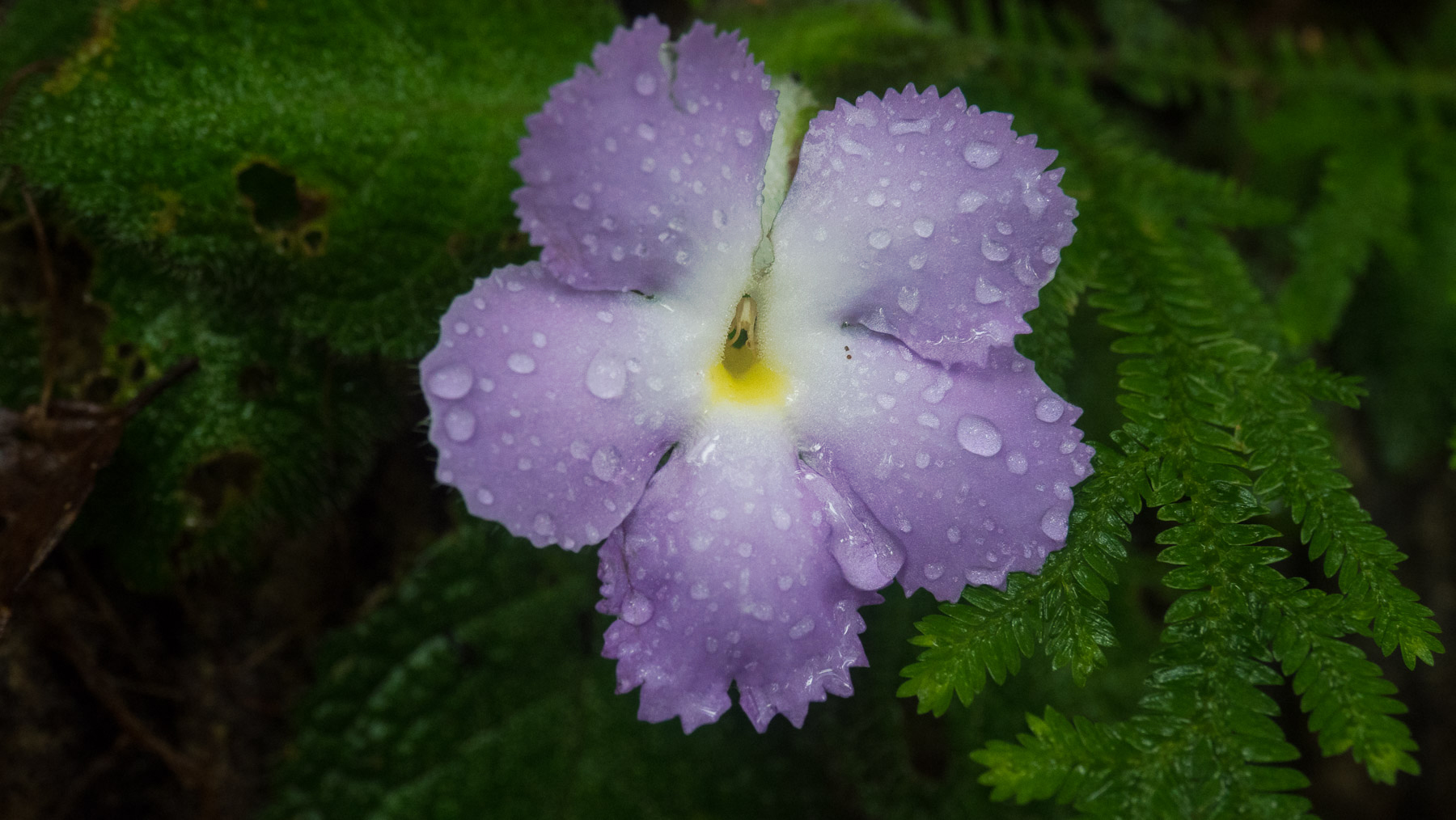 Wenige Blumen im unendlichen Grün