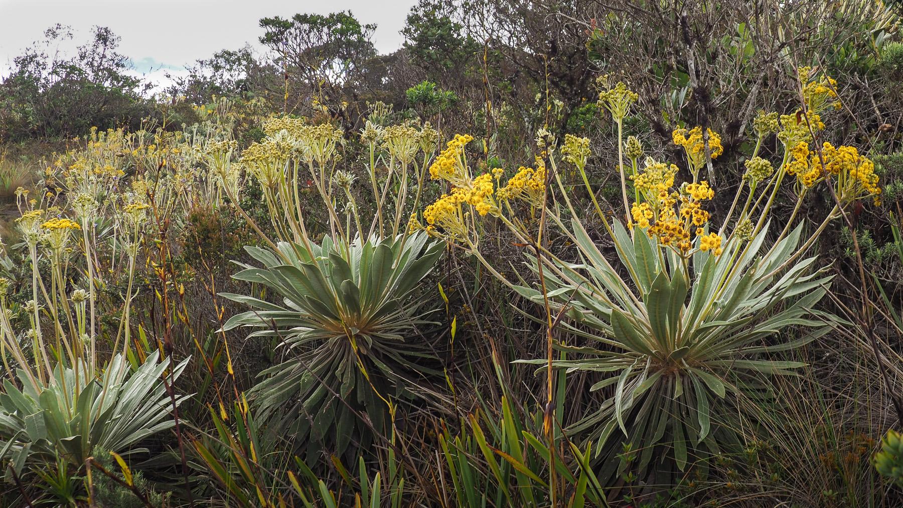 Besondere Pflanzen am Kraterrand