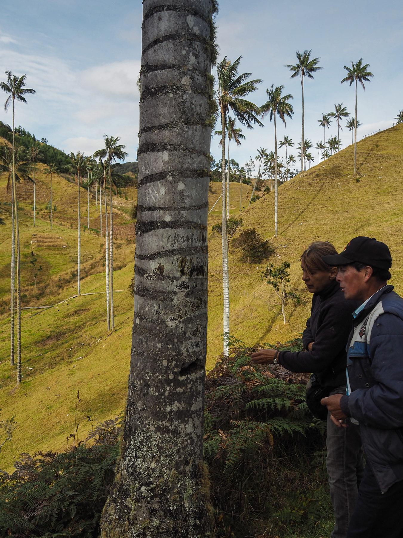 Luis erklärt, wie die Palmen früher genutzt wurden