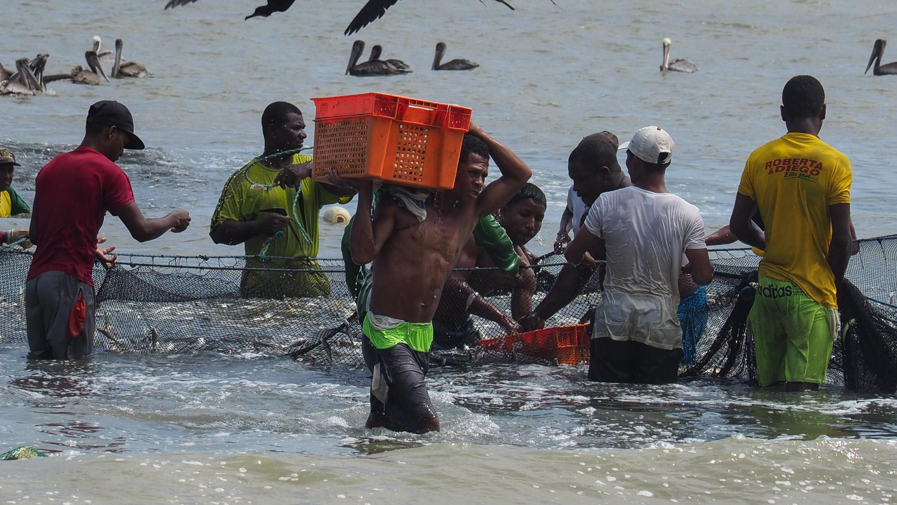 Kistenweise werden die Fische zum LKW getragen