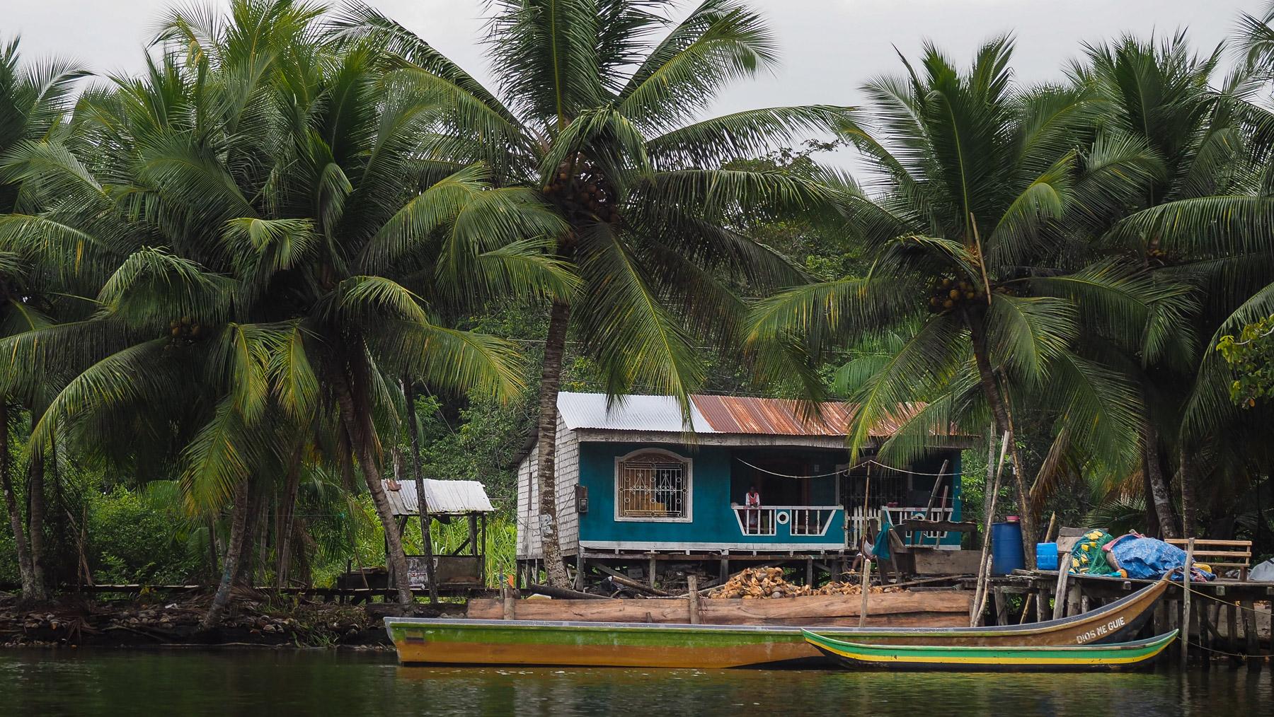… und an Kokosplantagen