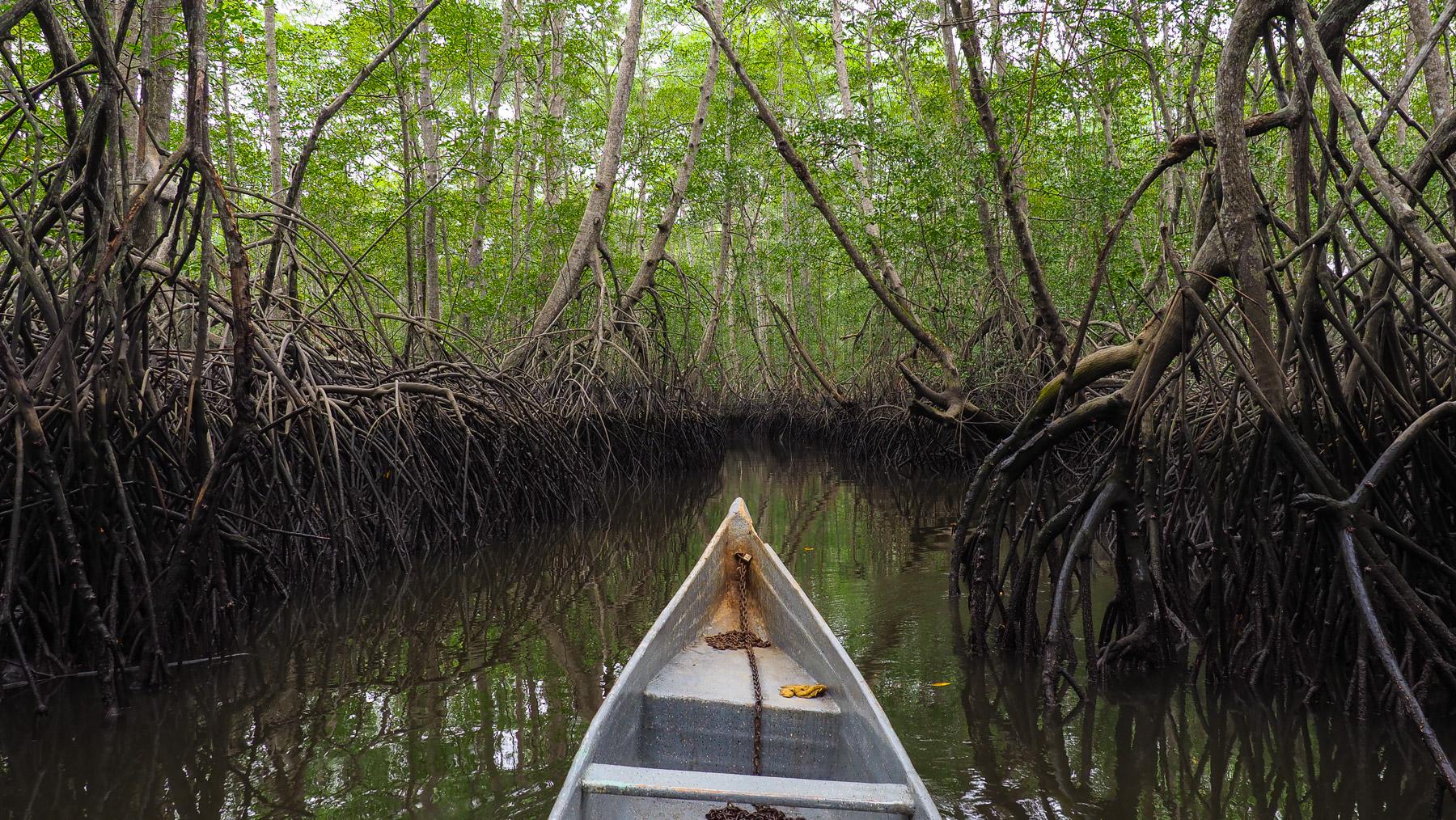 Durch gruselige Sümpfe mit riesigen Mangroven…