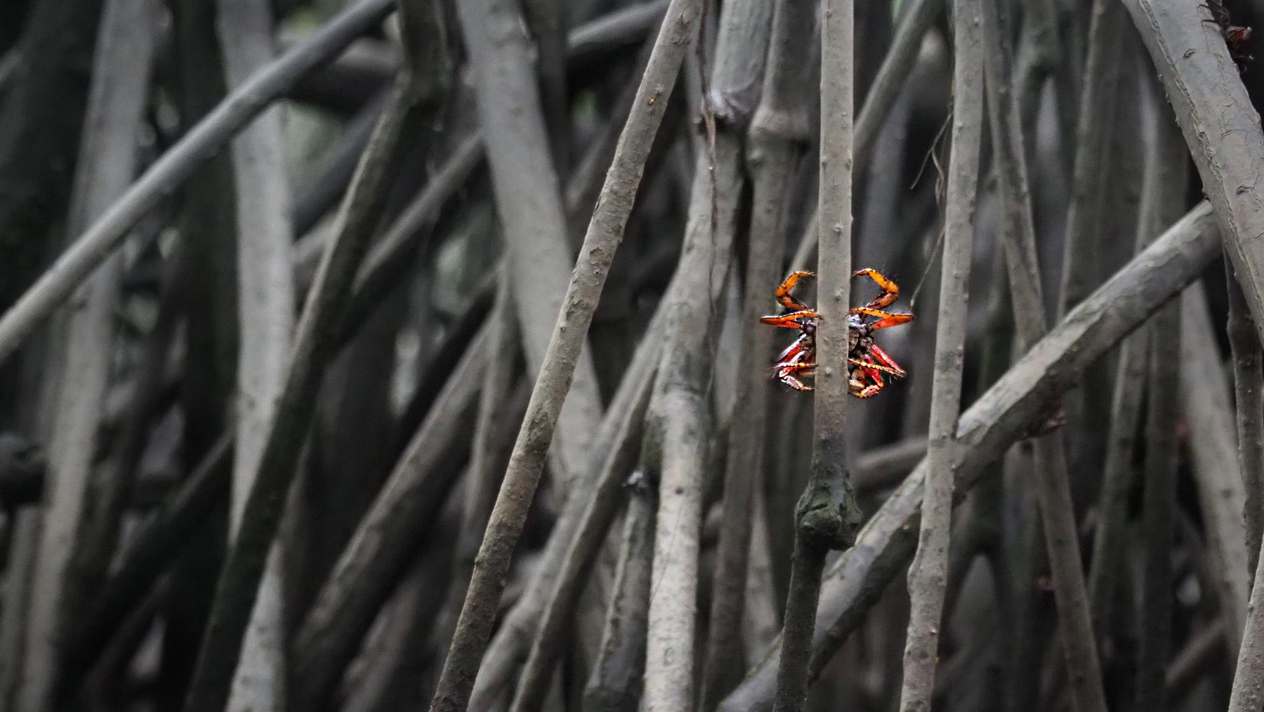 …und vielen roten Krabben. Diese hier versteckt sich vor uns