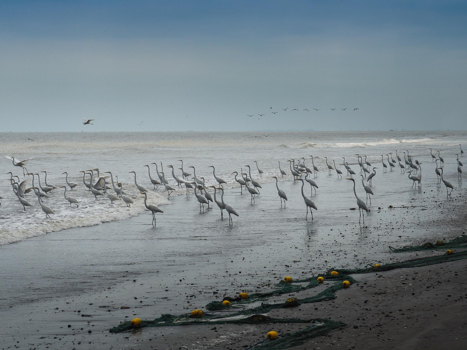 Das Aufgebot an Seevögeln, die auf ihren Anteil vom Fischfang warten, ist beeindruckend