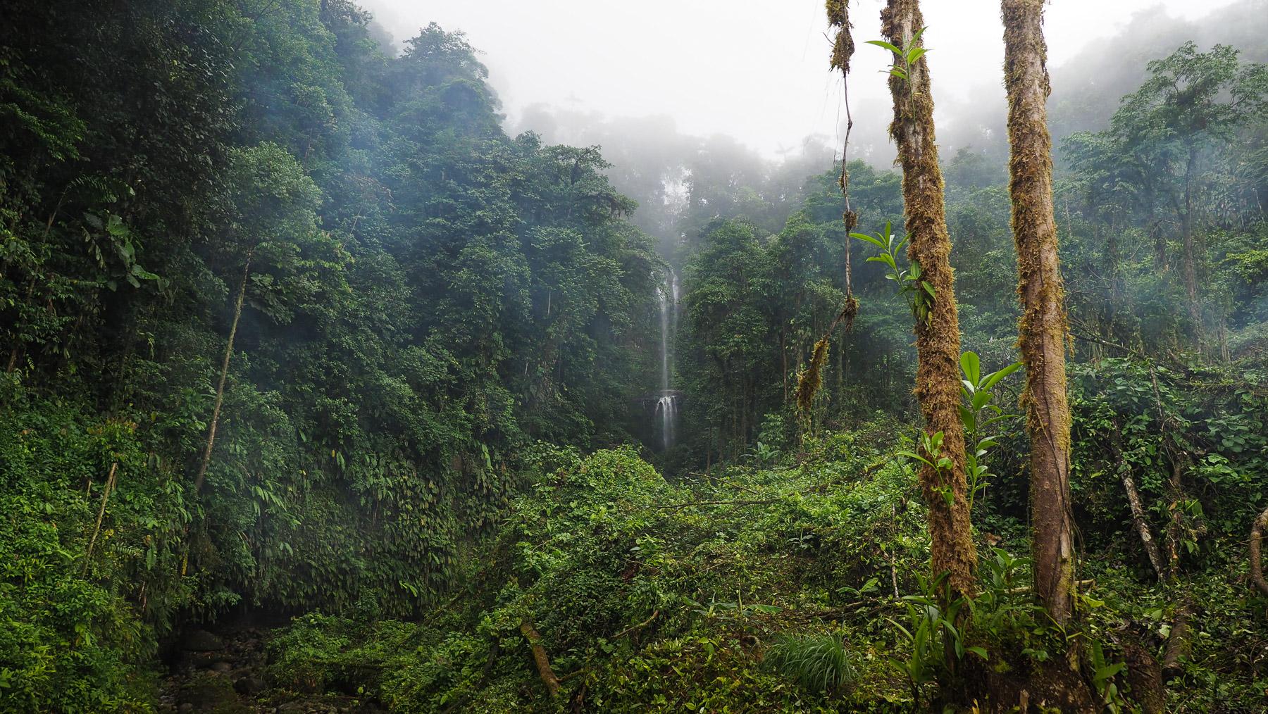 Idyllischer Dschungel, aber auch Schlamm und Regen