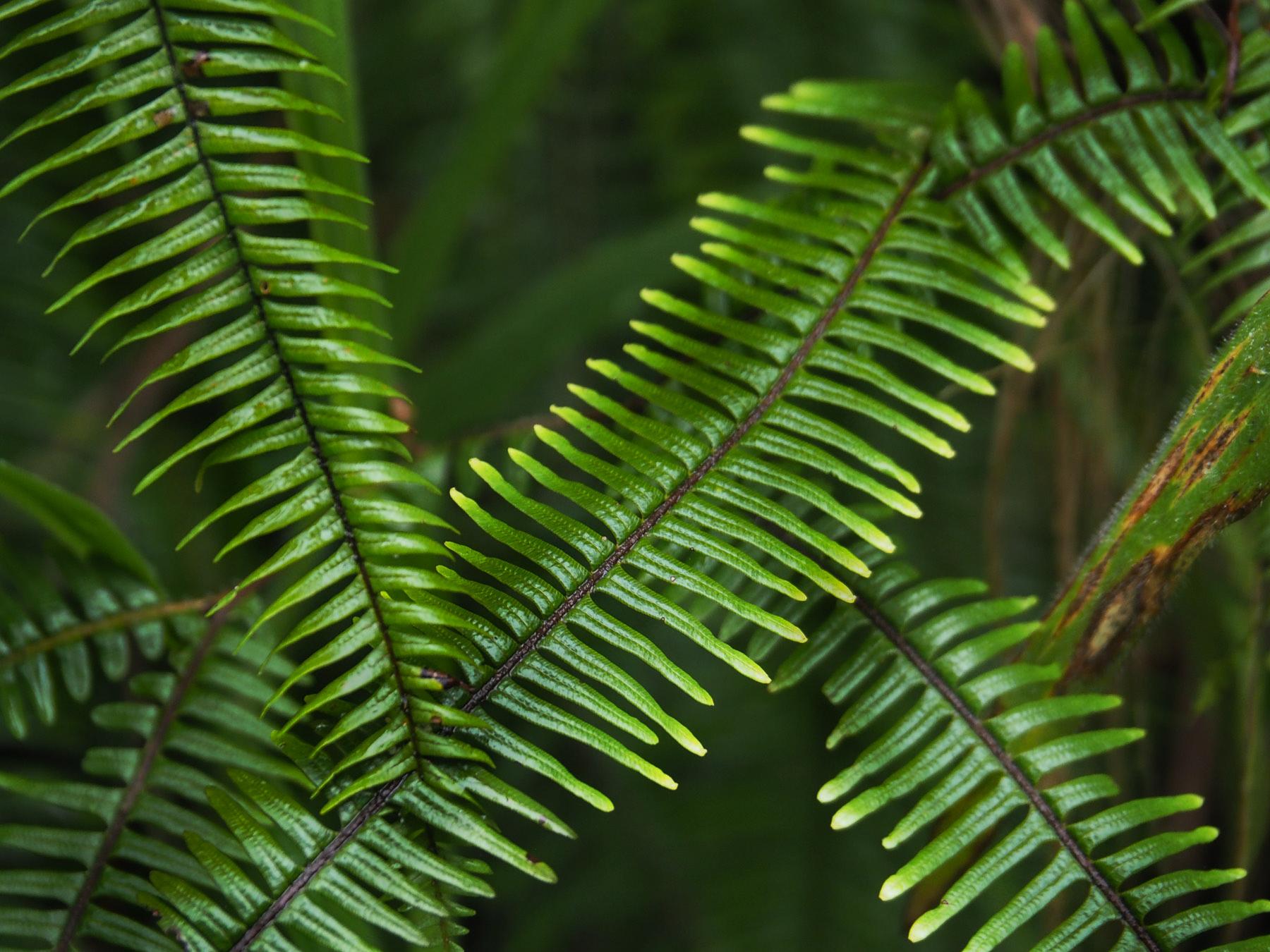 Blätterspiel