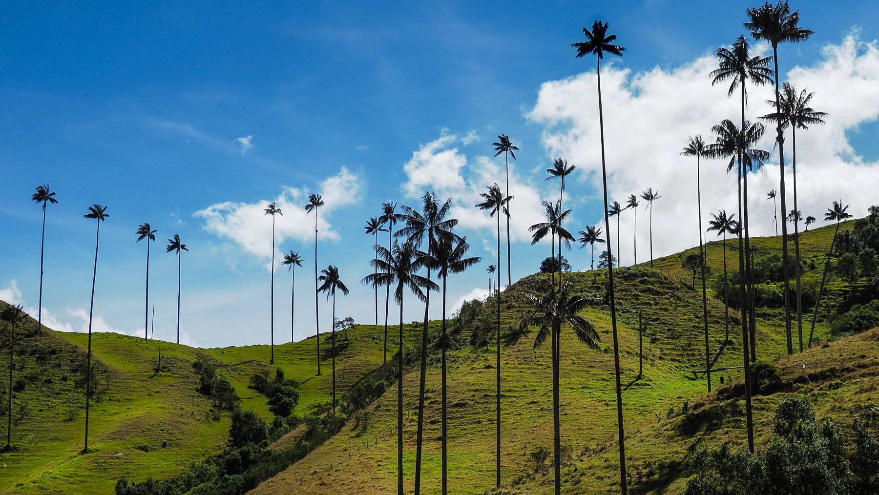 Beeindruckende Landschaft mit Wachspalmen