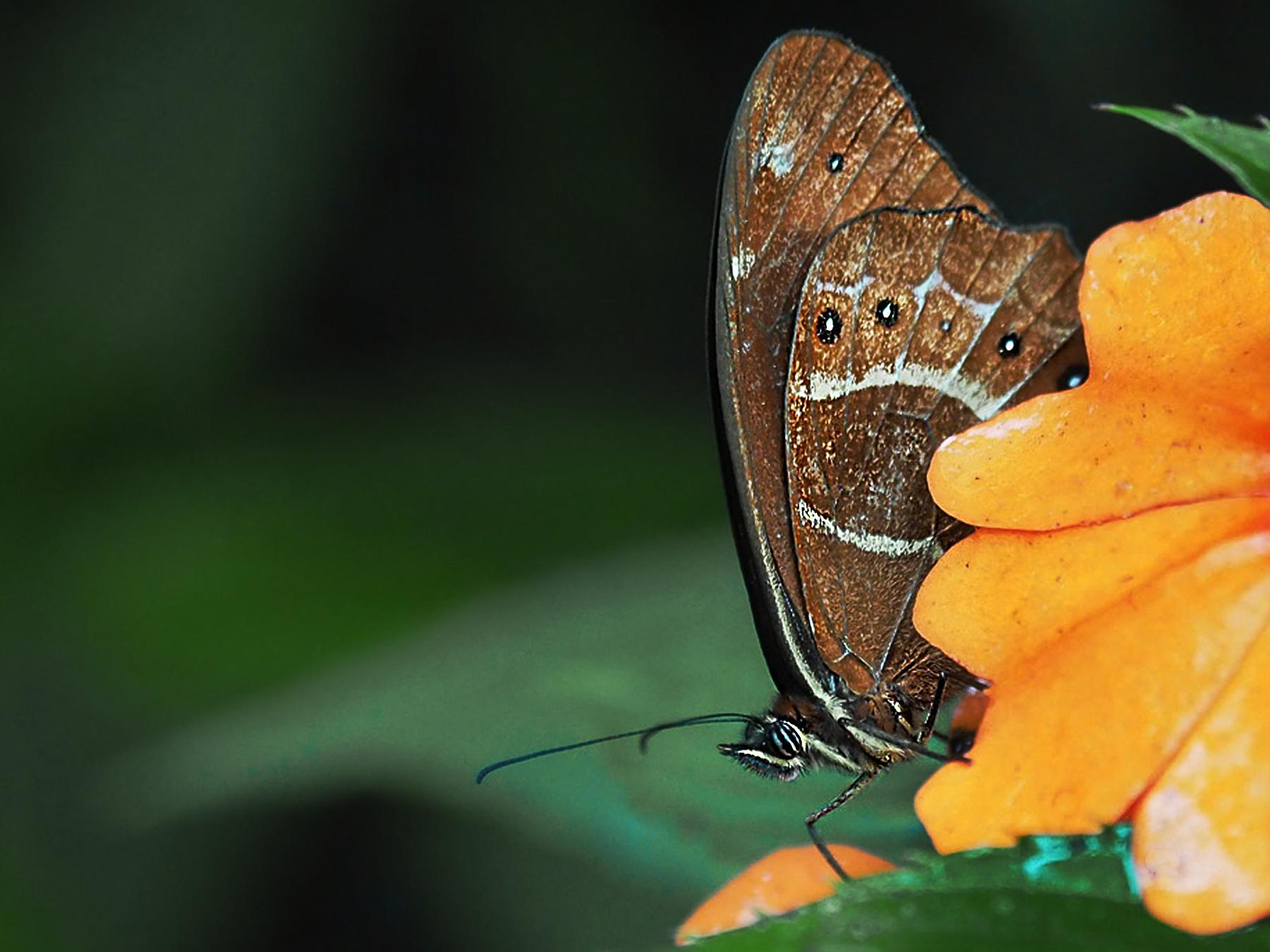 Im Schmetterlingspark, aber auch auf unseren Wanderungen sehen wir viele Schmetterlinge