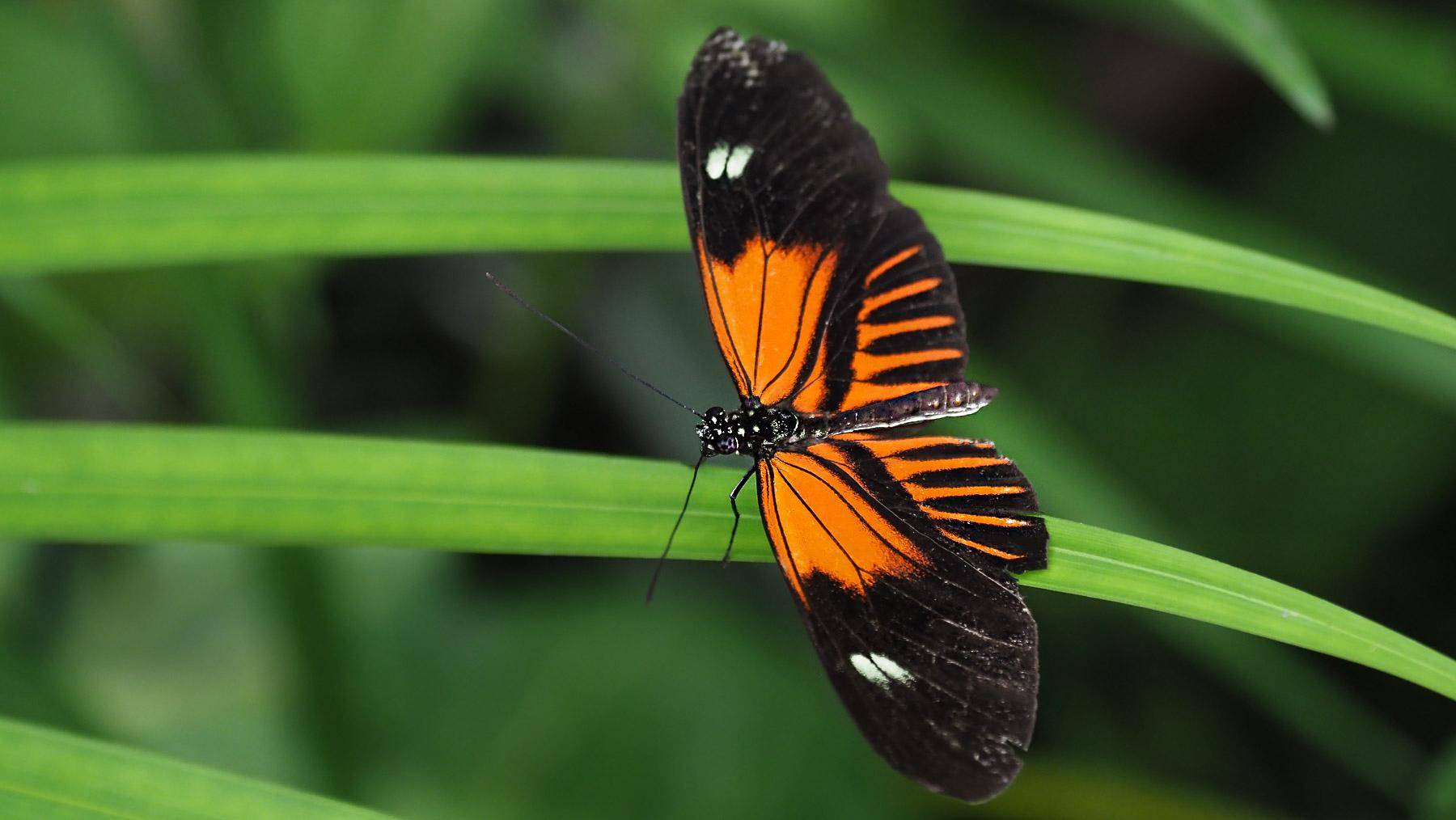 Viele verschiedene Schmetterlingsarten im Nebelwald