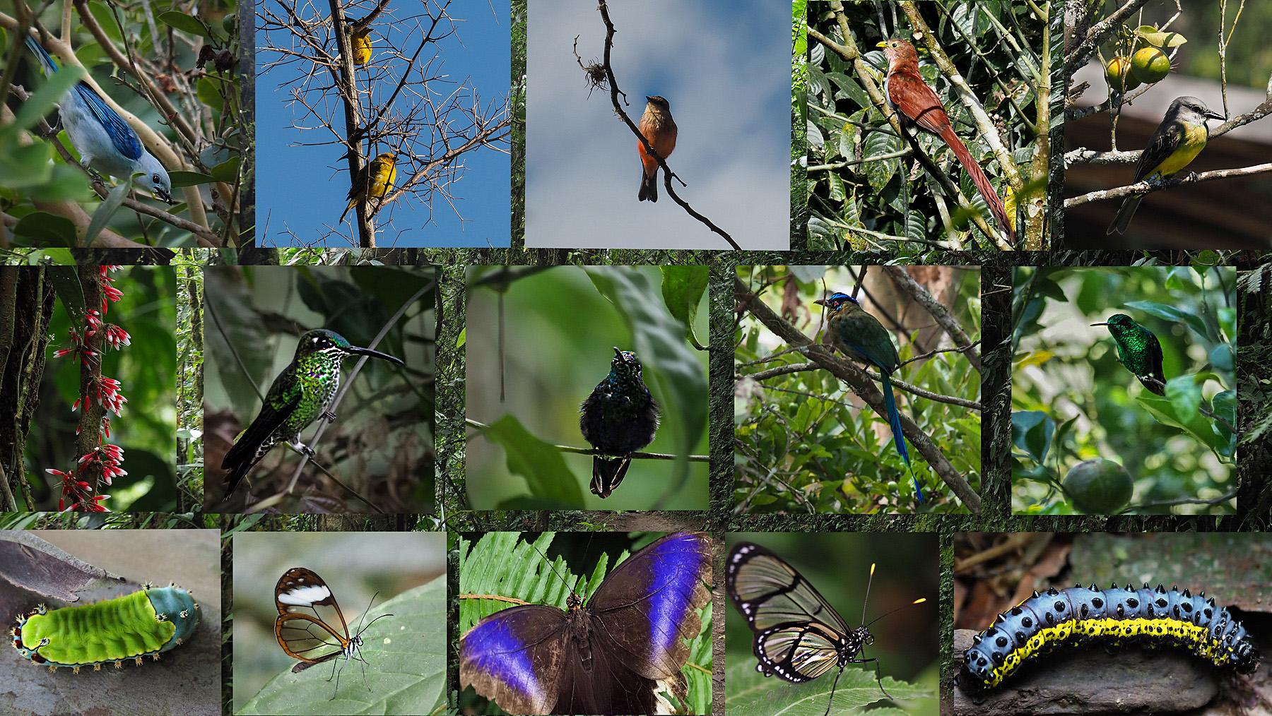 Es gibt viel zu sehen im Dschungel