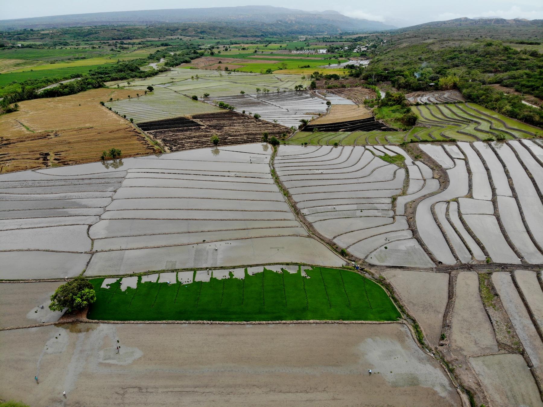 Reisfelder in Nordperu