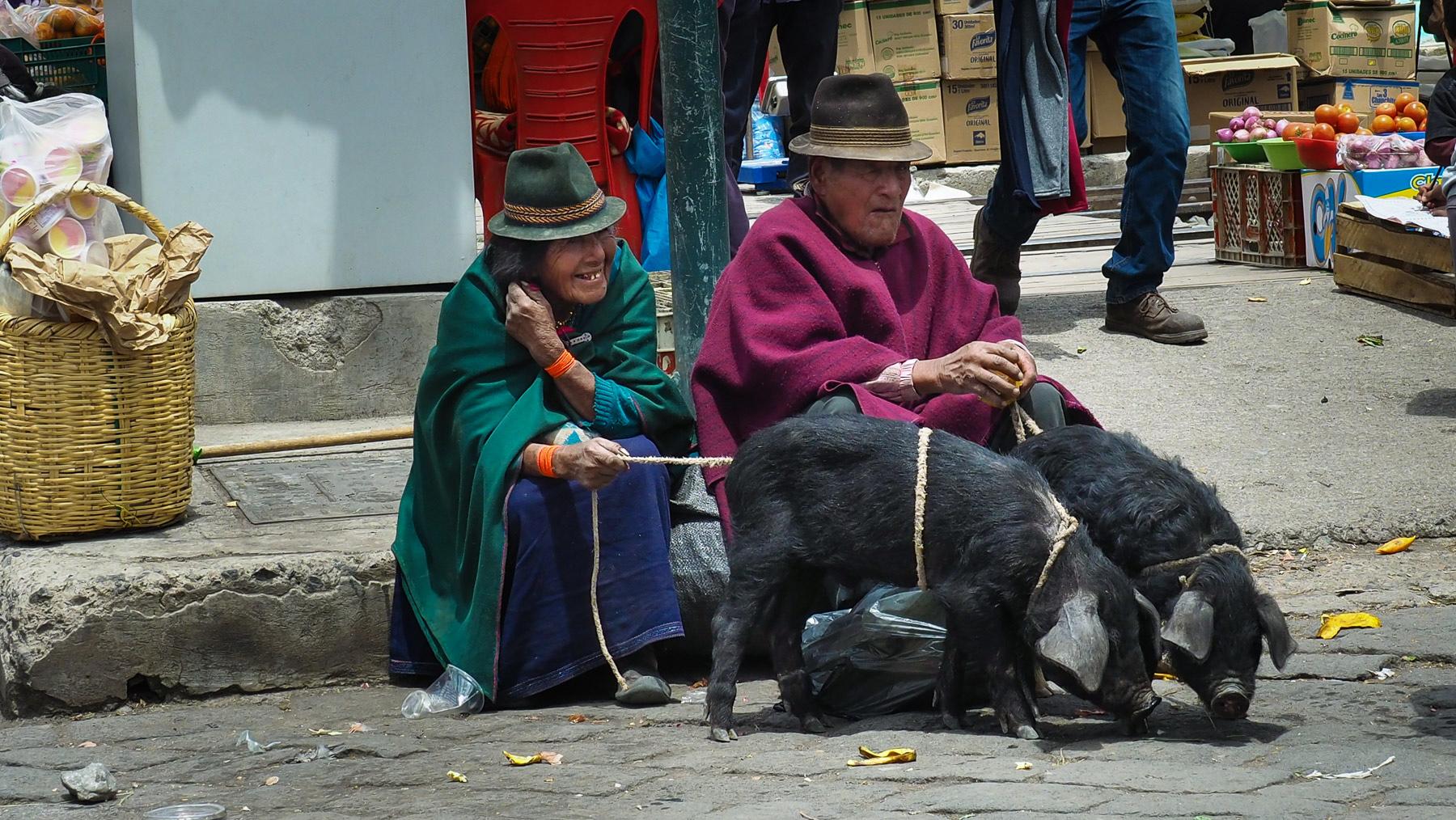Hier gibt's zwei Schweinchen zu kaufen
