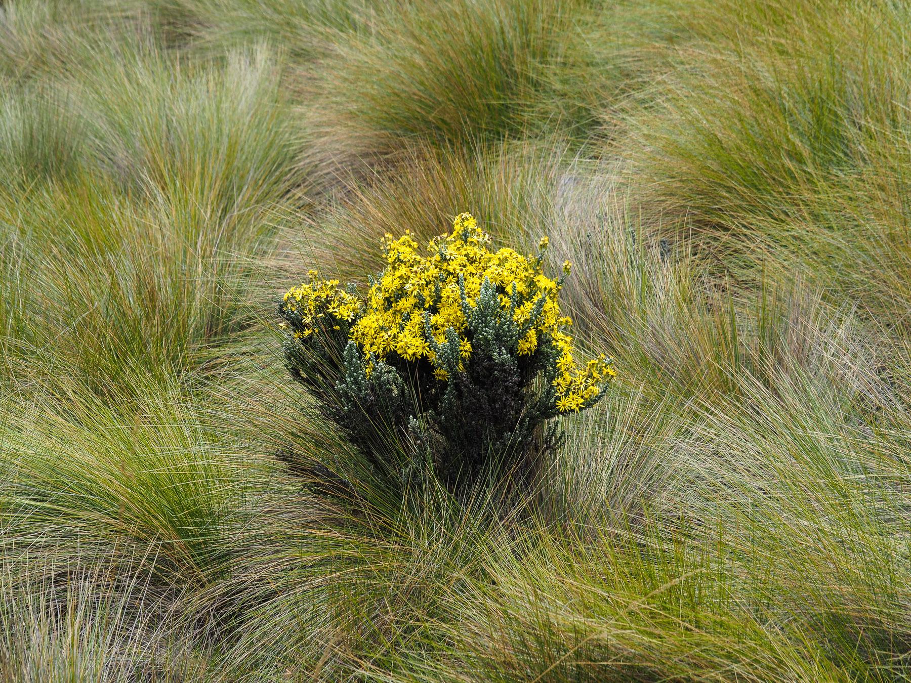 ..trotzdem gibt es einiges an Pflanzen zu entdecken