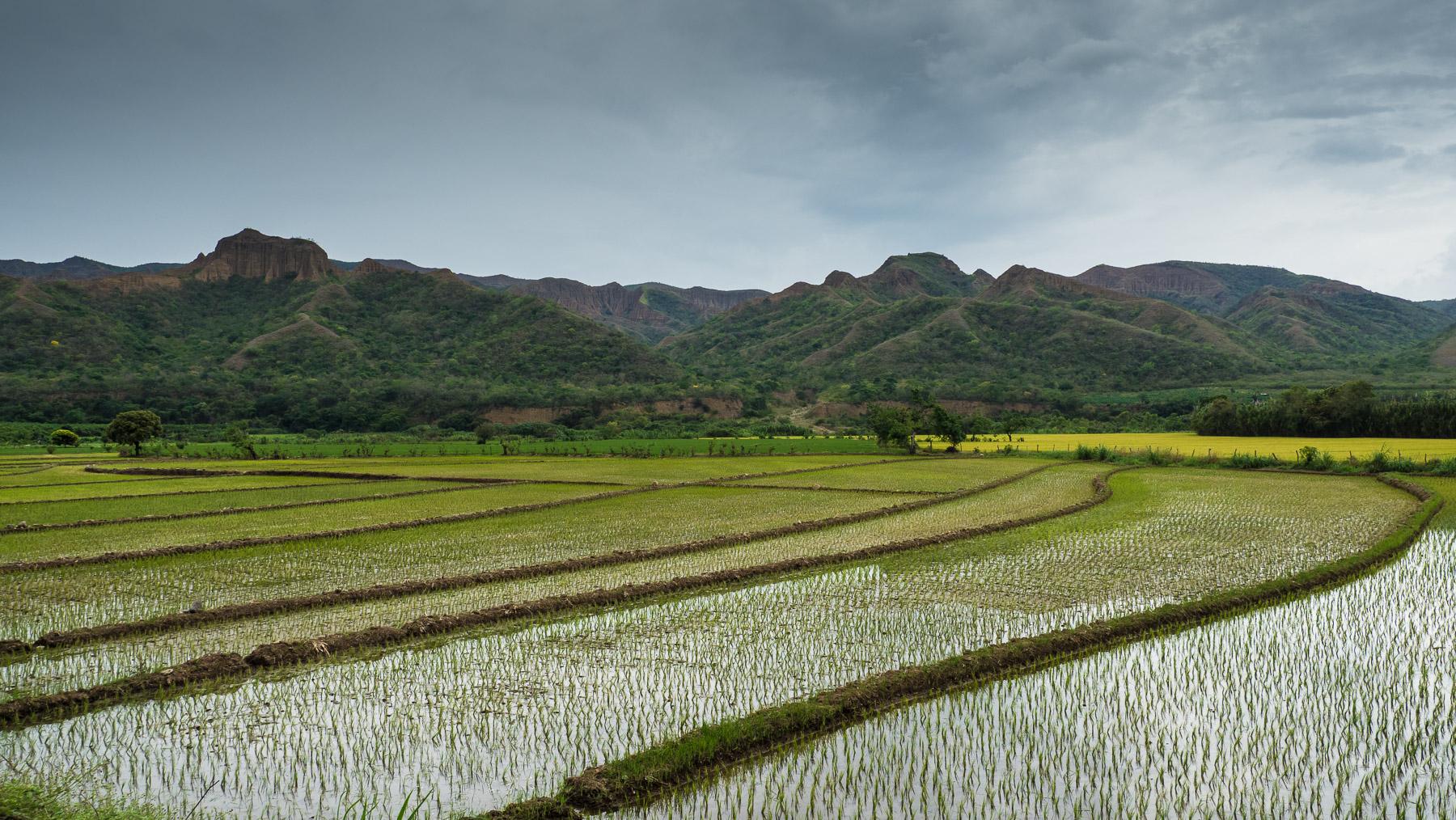 Überraschende erste Eindrücke in Peru: Reisfelder