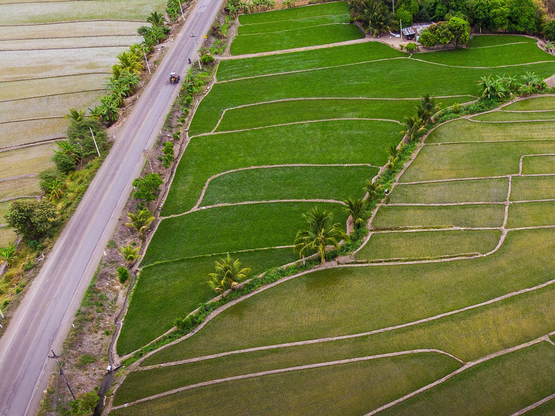 Reisfelder im Norden von Peru