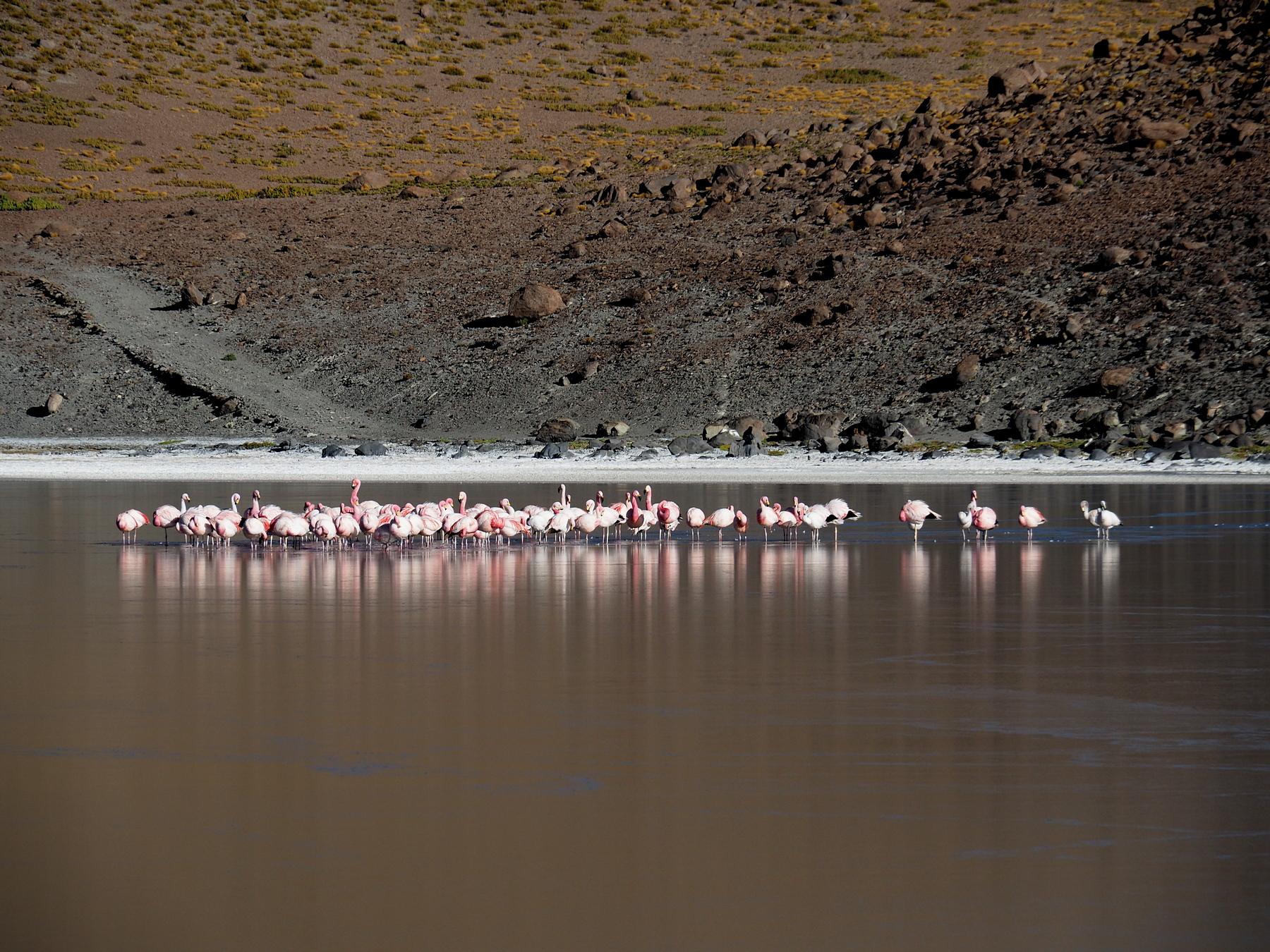 Und in jeder Lagune gibt es Flamingos