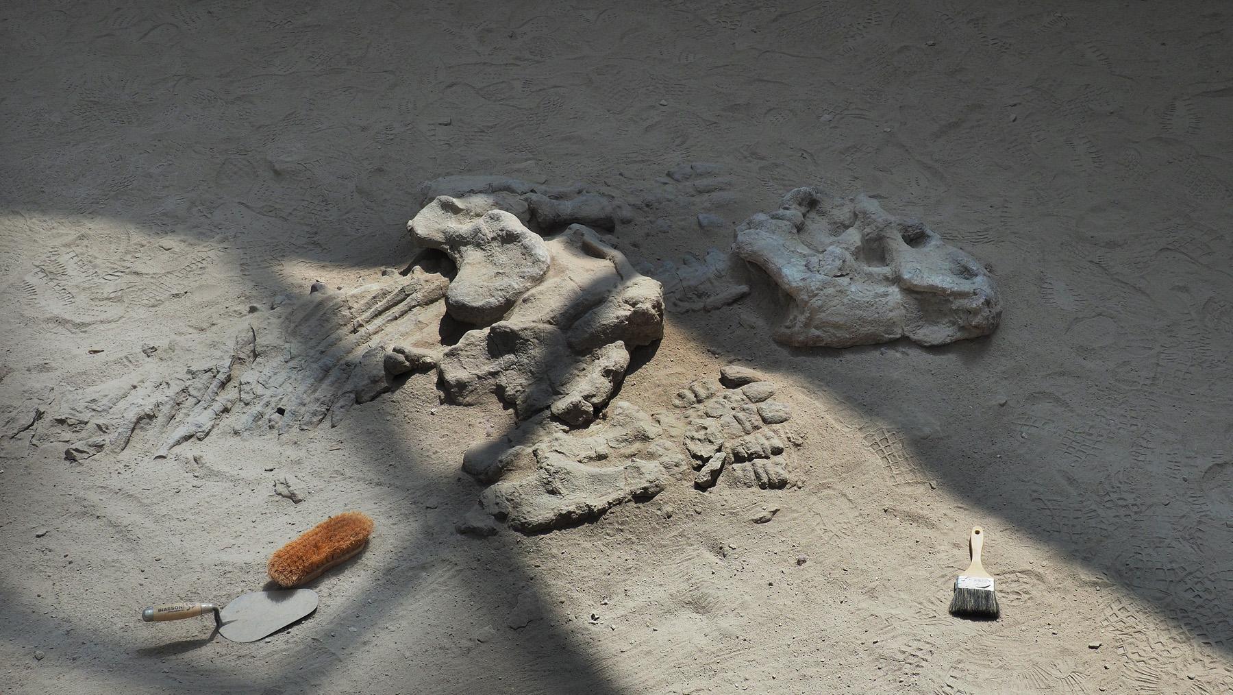 Im wahrsten Sinne uralte Fossilien