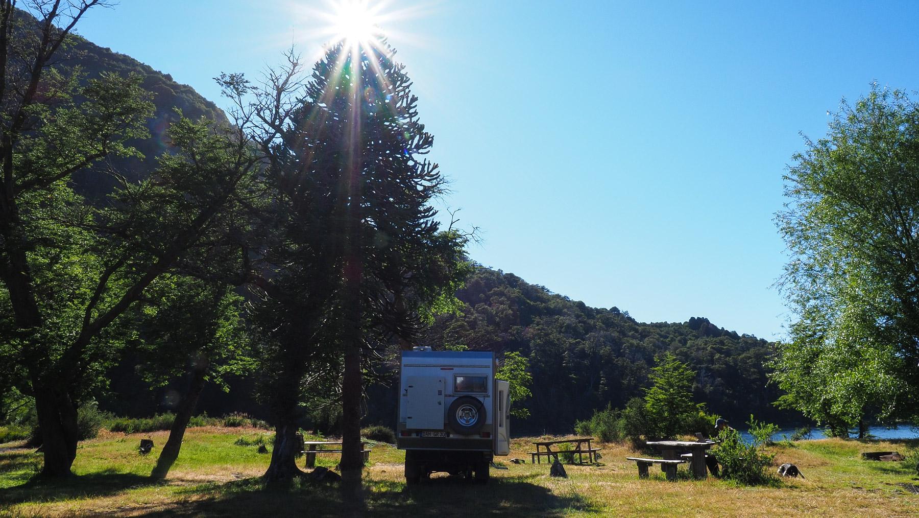 Stellplatz neben einem Urbaum