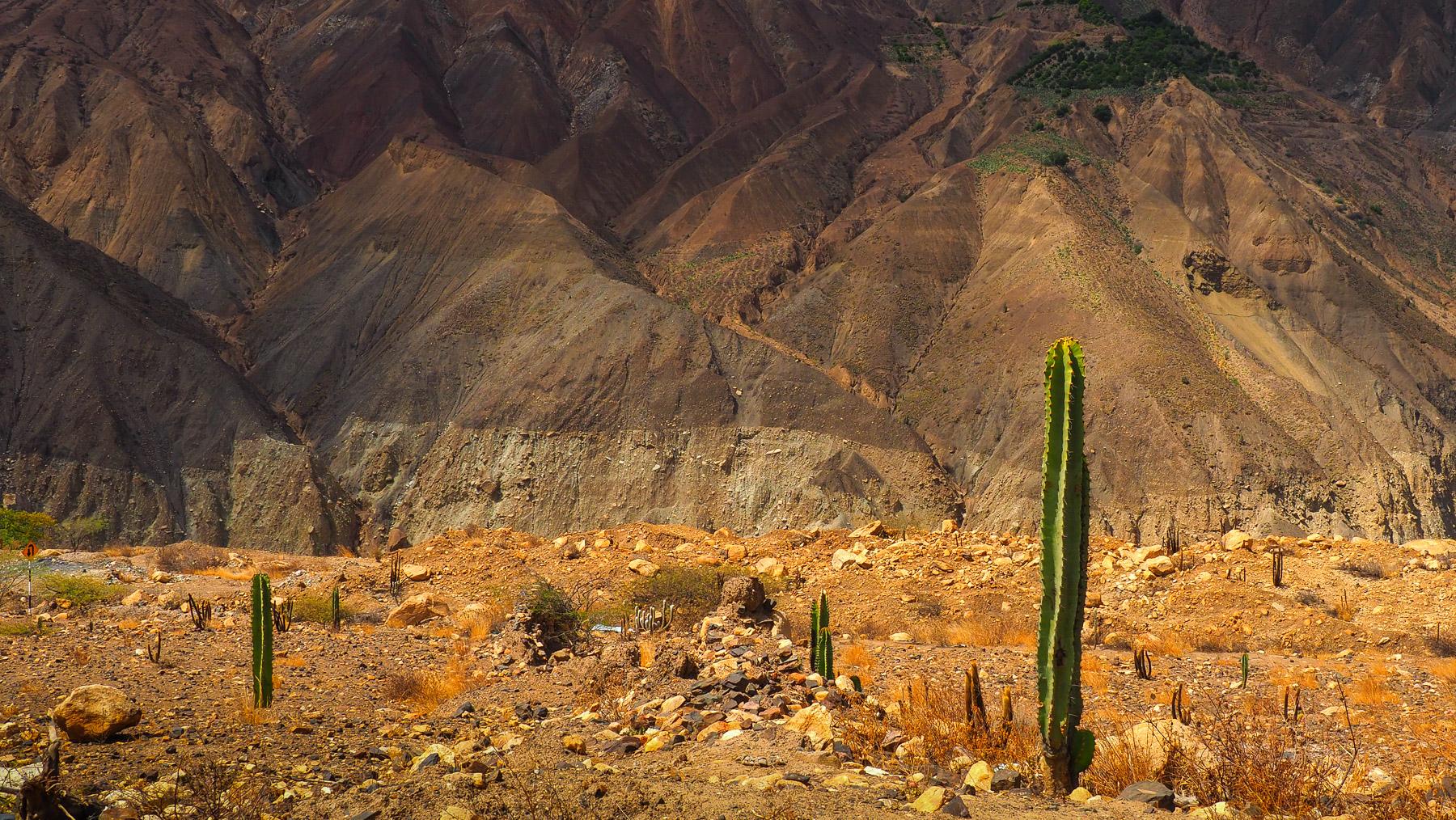Die Wüste begleitet uns noch lange