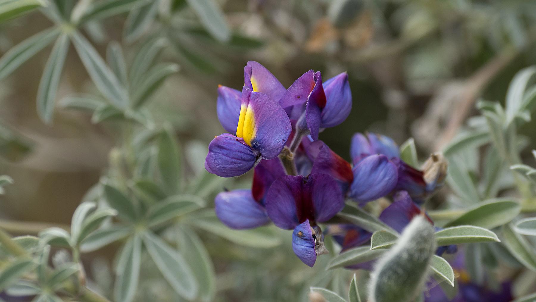 Die ersten Blumen. Die Regenzeit kündigt sich an
