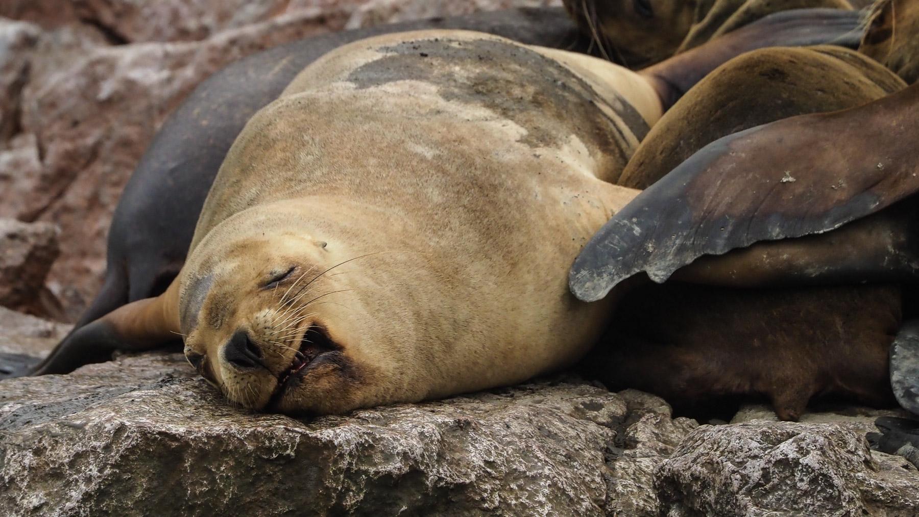 Die Seelöwen finden es hier gemütlich