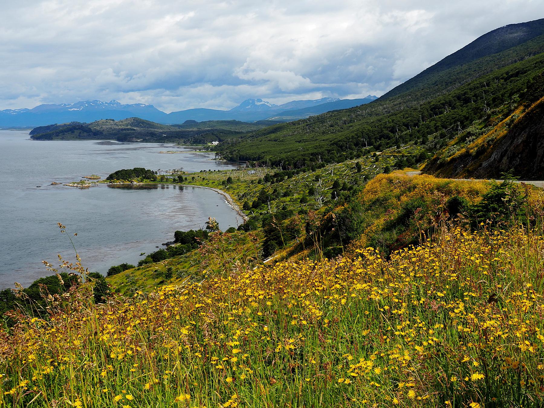 Hübsche Küste mit vielen Blumen