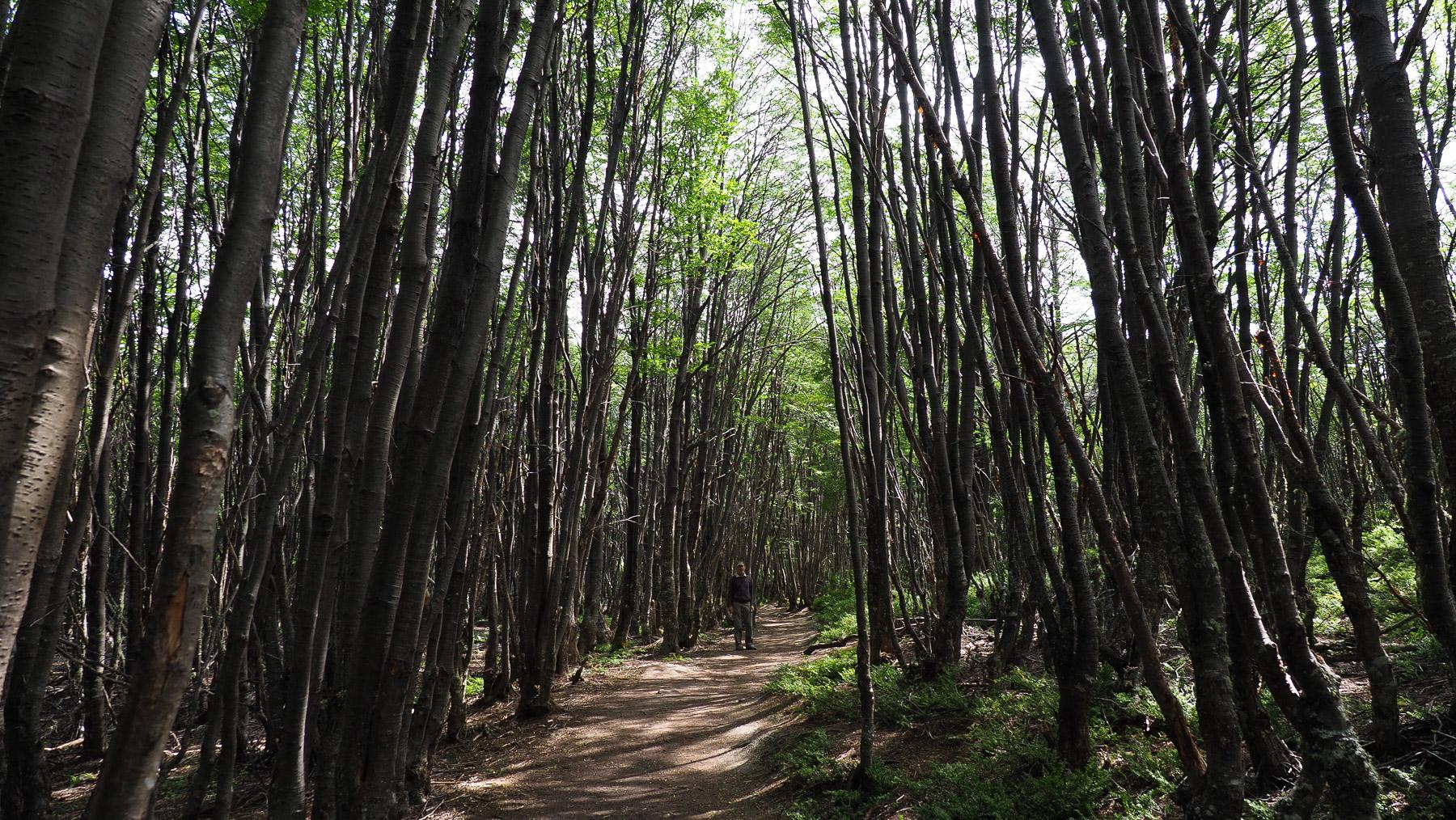 Schöne Wanderwege ...