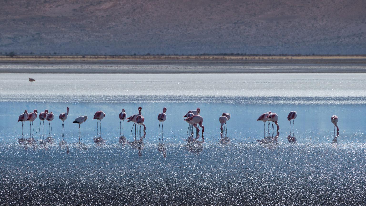 Flamingos auf 3800 m