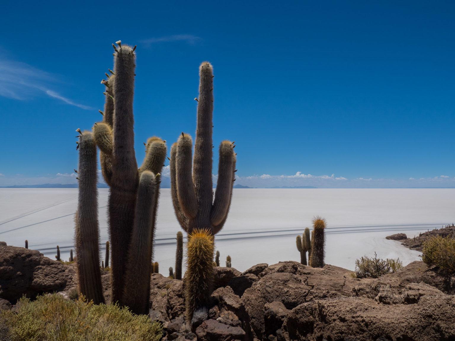 Kleine Kakteen-Insel Incahuaca im Salzmeer
