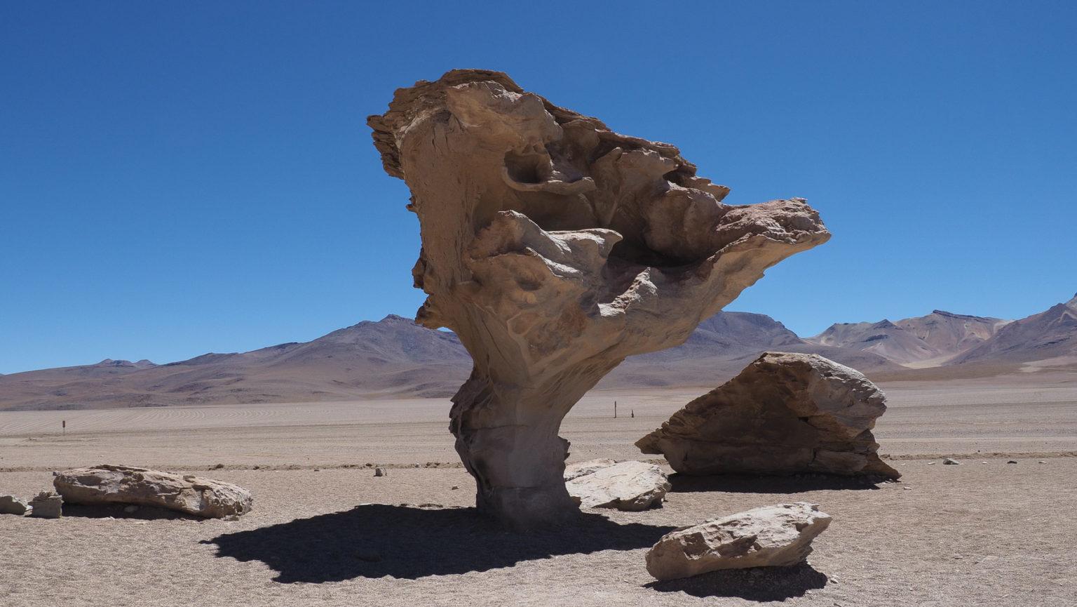 Steinbaum auf der Lagunenroute in Bolivien