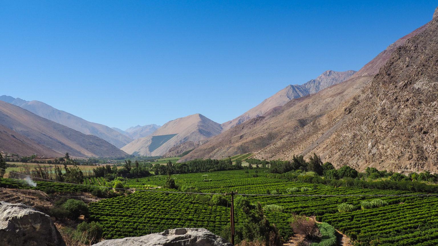 Weinanbau im Valle de Elqui für die Pisco Produktion