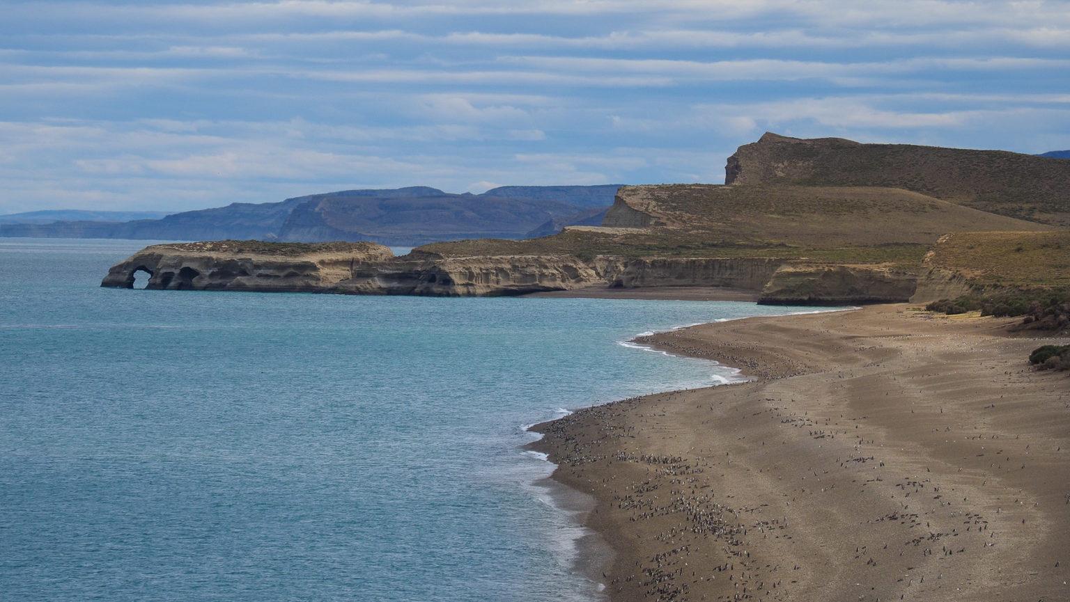 Dieser Strand ist voller Pinguine!