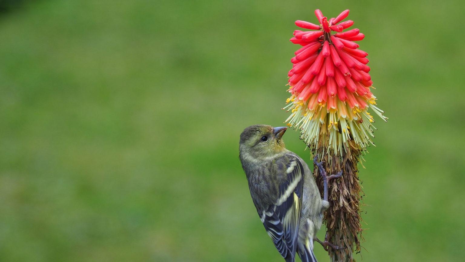 Die Vögel finden hier einiges an Nahrung