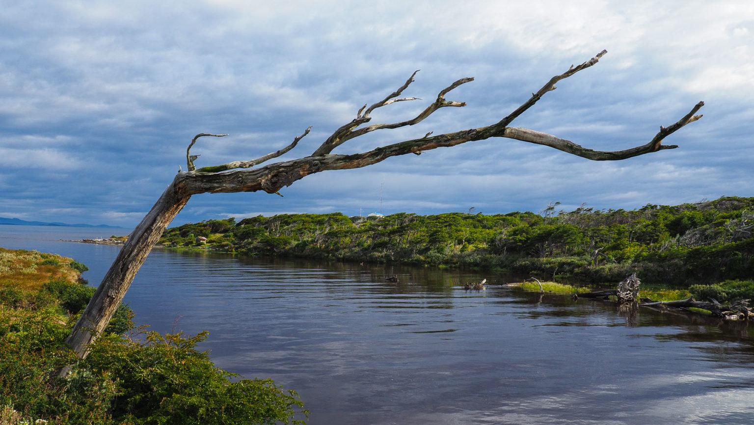 Der ständige starke Wind formt die Bäume