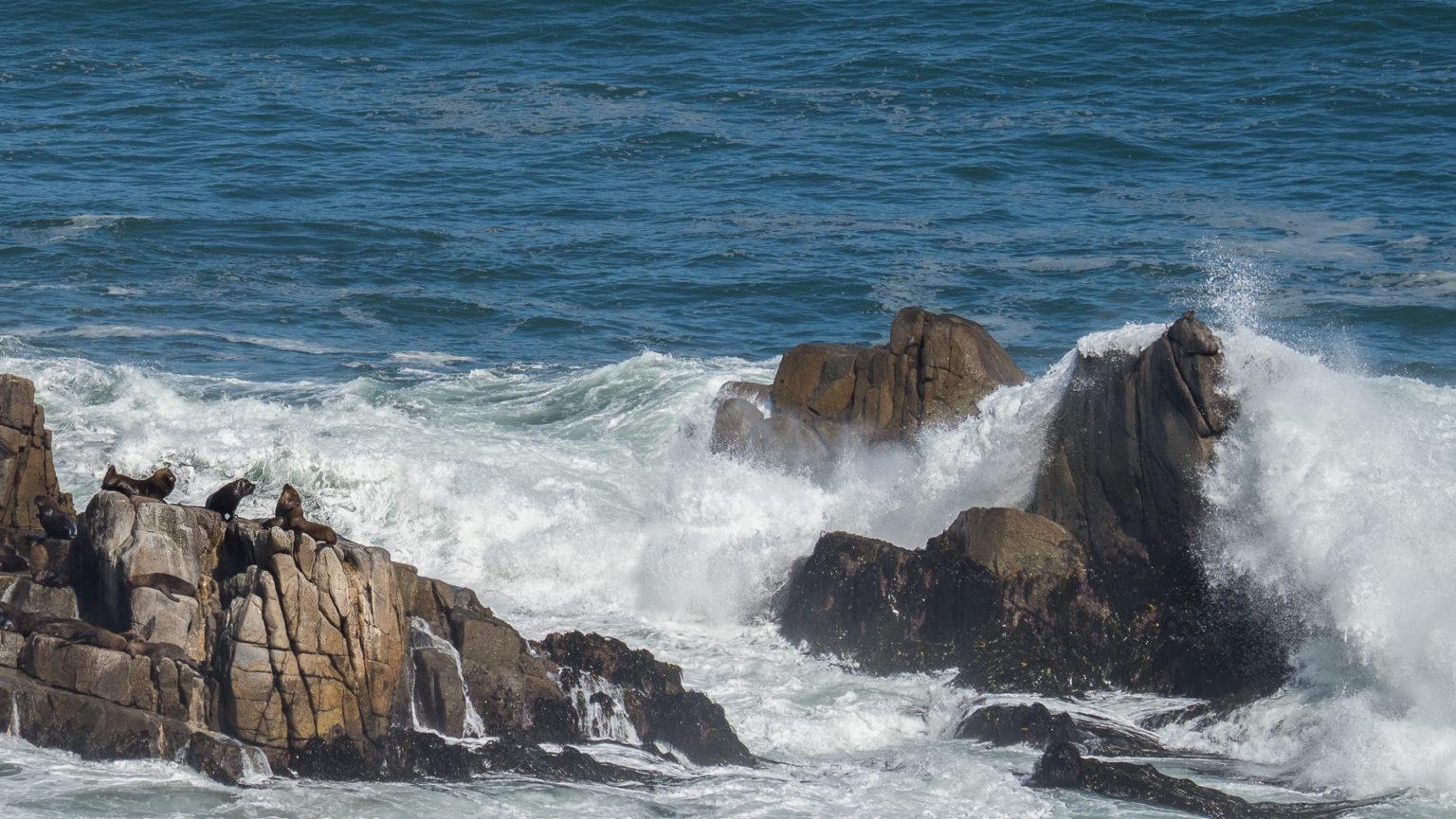 Die letzten Seelöwen